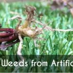 Removing Weeds from Artificial Grass