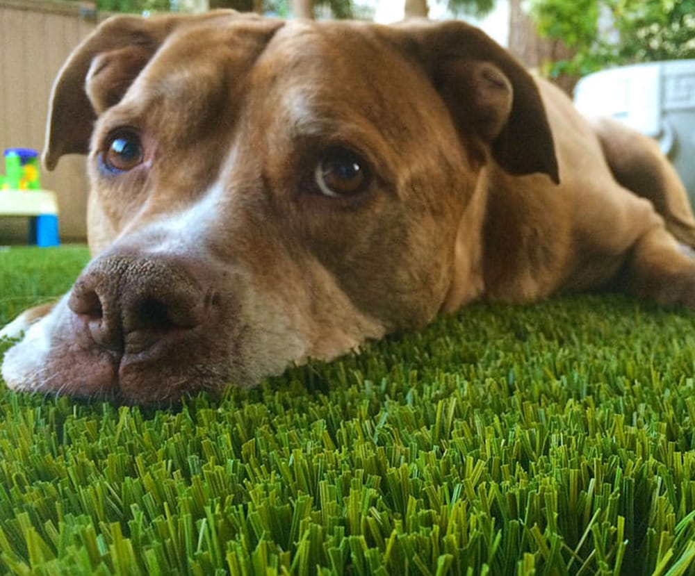 Deodorize Artificial Grass to Remove Pet Odours