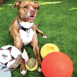 happy dog with pet toys laying on artificial grass lawn