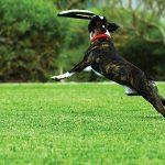 Pets Love Artificial Grass