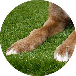 Bella Turf artificial grass for Pets