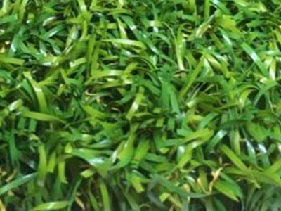 The World S Finest Artificial Grass Bella Turf