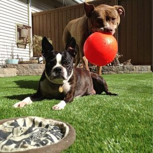 Artificial grass with dog
