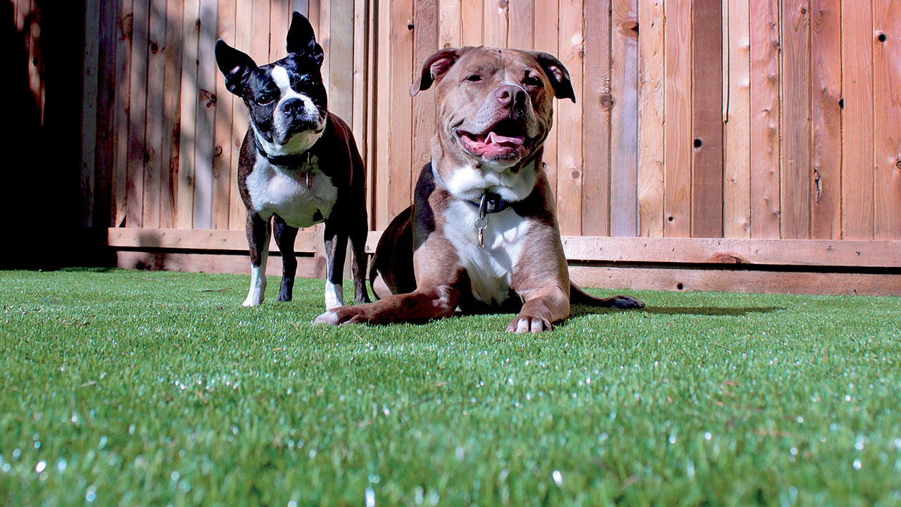 bella-turf-pet-friendly-artificial-turf-grass-fake-plastic-grass-from-bella-turf-canada-new-grass-products-2019_0001_osk