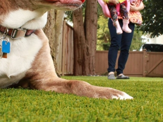 bella-turf-pet-friendly-artificial-turf-grass-fake-plastic-grass-from-bella-turf-canada-new-grass-products-2019_0003_img