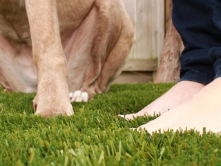 bella-turf-pet-friendly-artificial-turf-grass-fake-plastic-grass-from-bella-turf-canada-new-grass-products-2019_0004_img