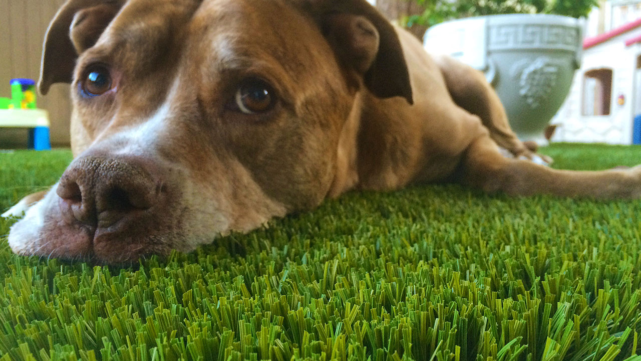 bella-turf-pet-friendly-artificial-turf-grass-fake-plastic-grass-from-bella-turf-canada-new-grass-products-2019_0012_201
