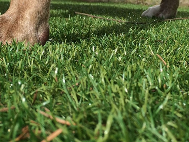 bella-turf-pet-friendly-artificial-turf-grass-fake-plastic-grass-from-bella-turf-canada-new-grass-products-2019_0013_201