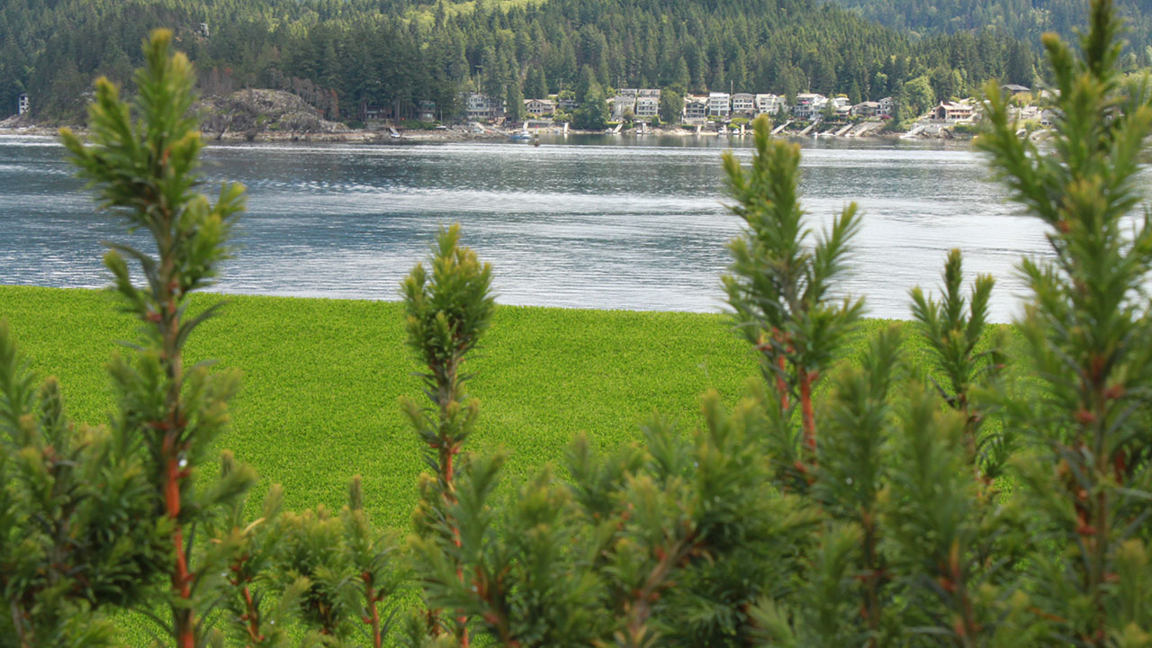 landscapes-bella-turf-new-artificial-grass-for-canada-photos-2019-_0002_img_8044