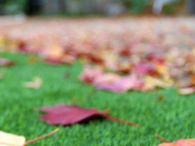 landscapes-bella-turf-new-artificial-grass-for-canada-photos-2019-_0011_fall-focus