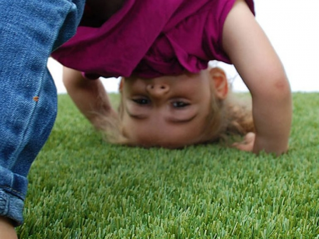 playground-grass-artificial-turf-for-kids-and-pets-bella-turf-grass-_0004_mabel-downdog