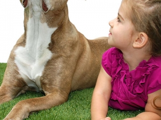 playground-grass-artificial-turf-for-kids-and-pets-bella-turf-grass-_0005_mabel-coco