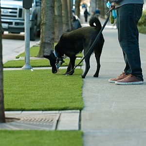 dog sniffing artificial grass