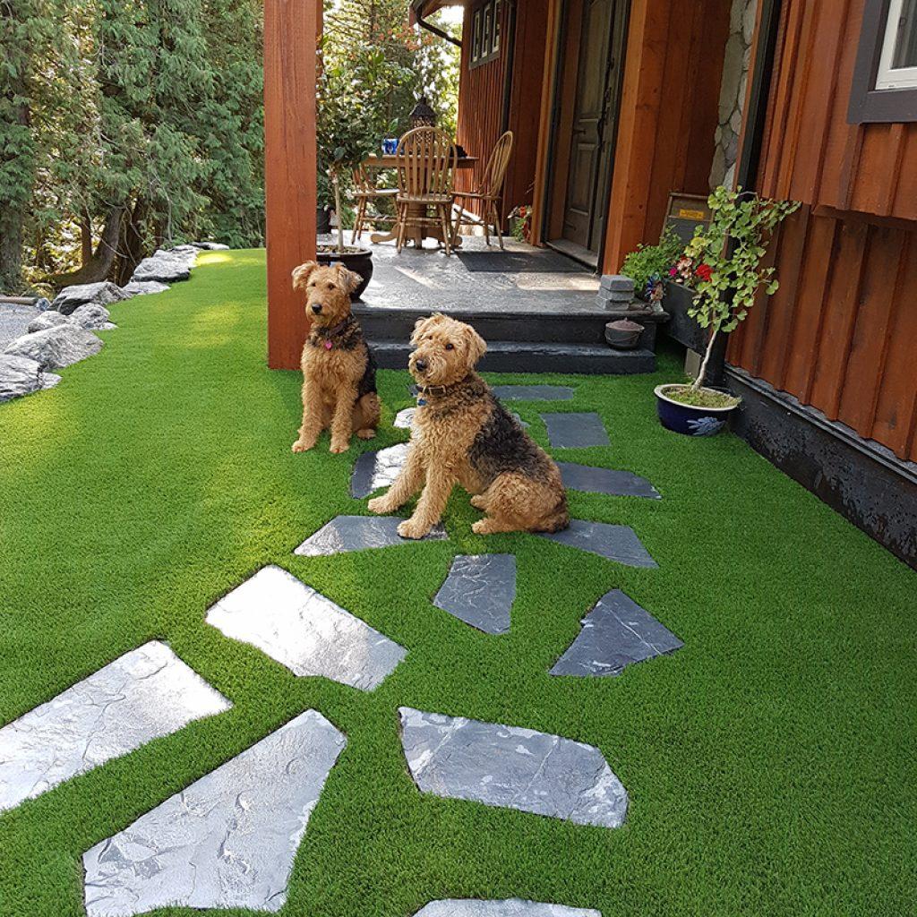 Dogs enjoying Artificial Grass backyard landscape